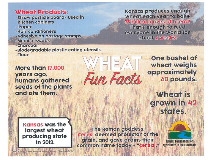 Wheat Fun Facts